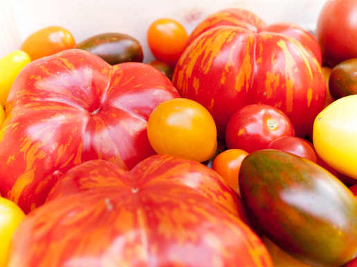 Heirloom tomato cultivars